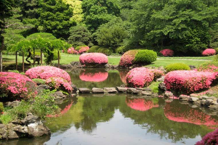 Pranverë në Tokio