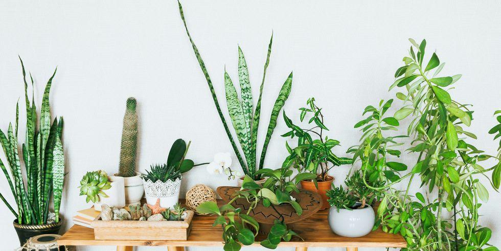 Disa bimë shumë të bukura, të cilat marrin pothuajse zero hapësirë!